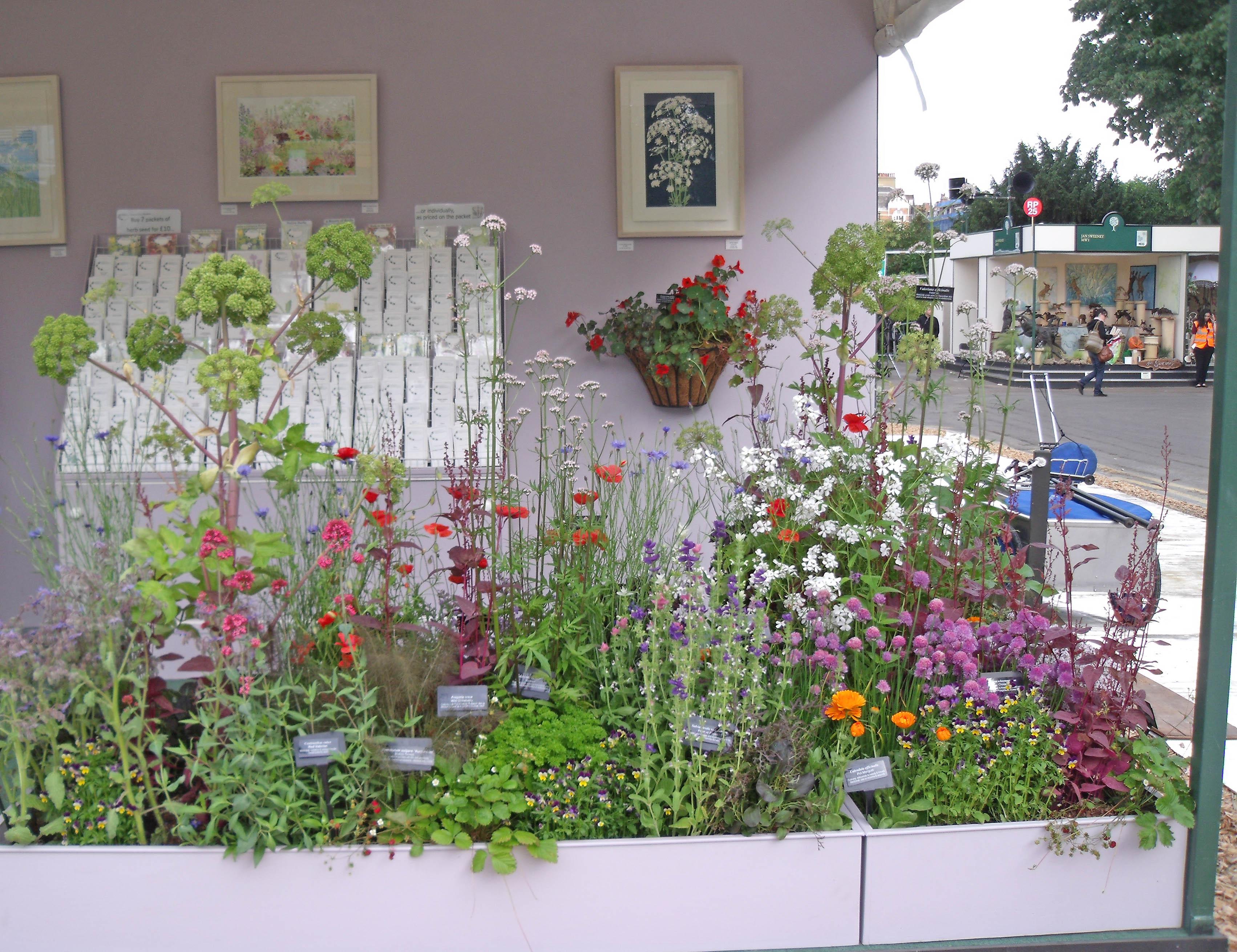 Stevia   Jekka's Herb Farm on autumn floral border design, border rock garden design, border flower design, plant border design, border garden design ideas, border shade garden design, border christmas design,