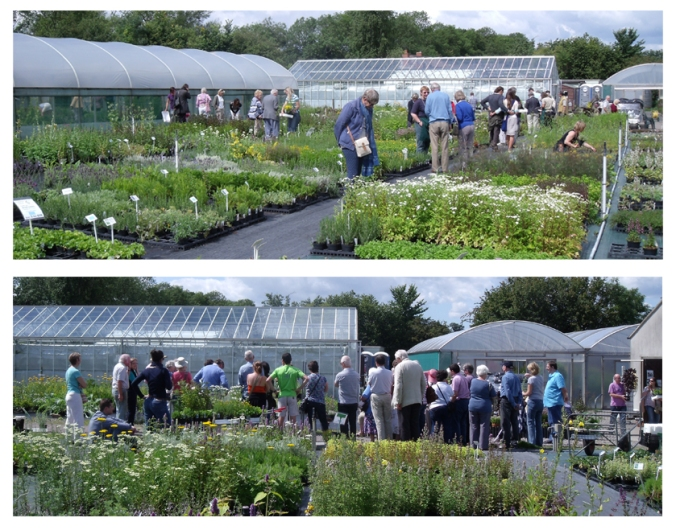 Jekka's Herb Farm Open Days - 650+ organic herb varieties
