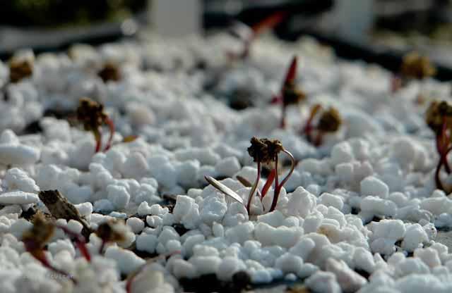 Seedlings in January