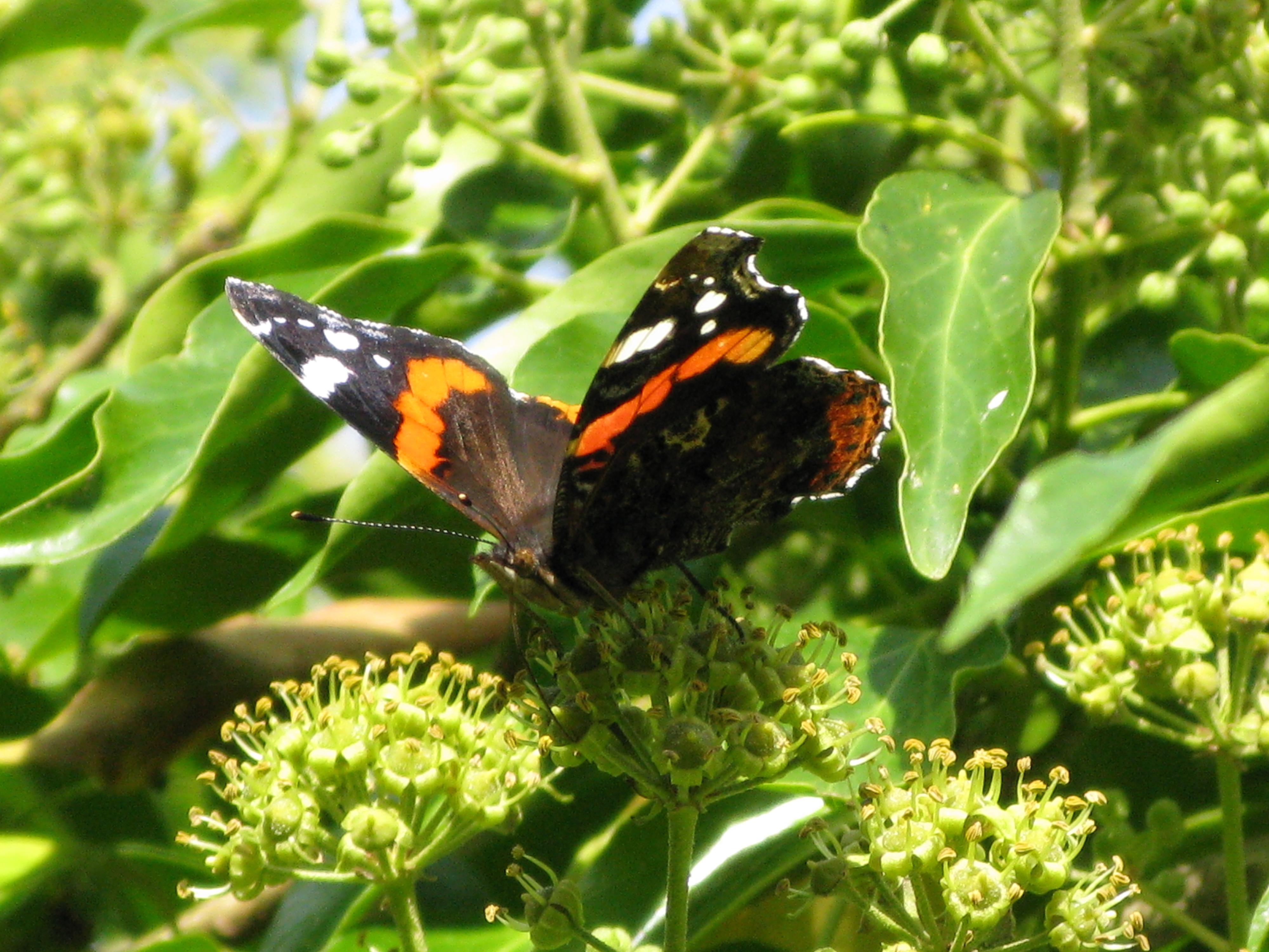 Butterfly and bee herbs jekkas herb farm we buycottarizona