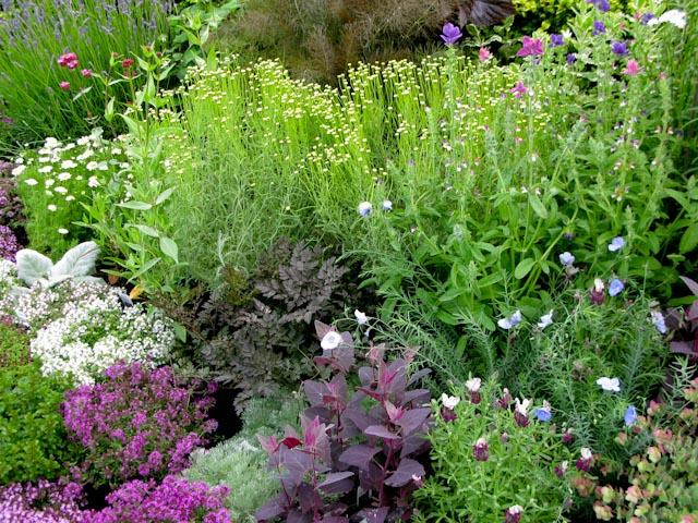 Herb garden June
