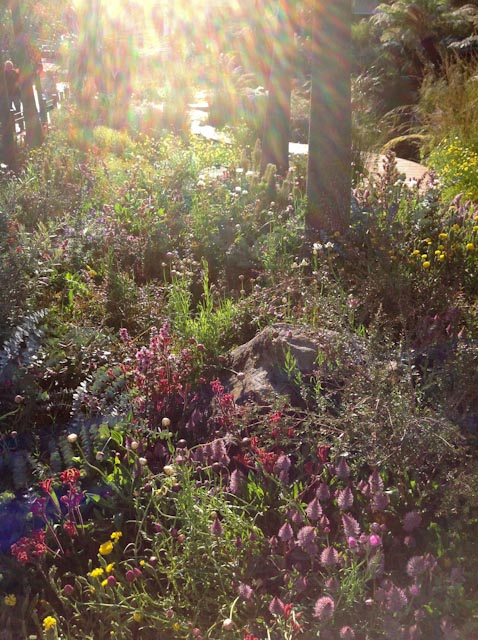 The Trailfinders Australian garden early in the morning.