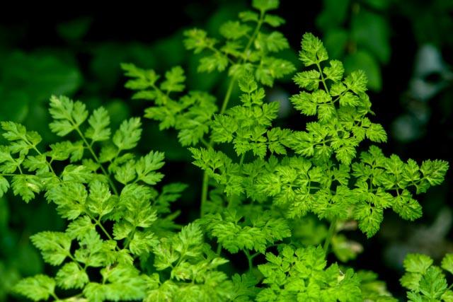 PA33 leaf landscape