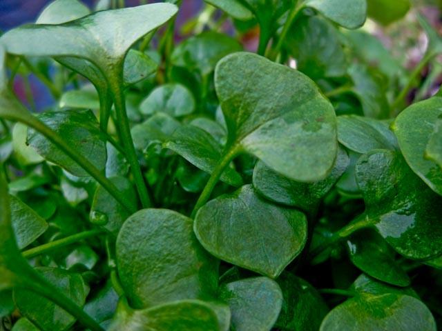PC24 leaf